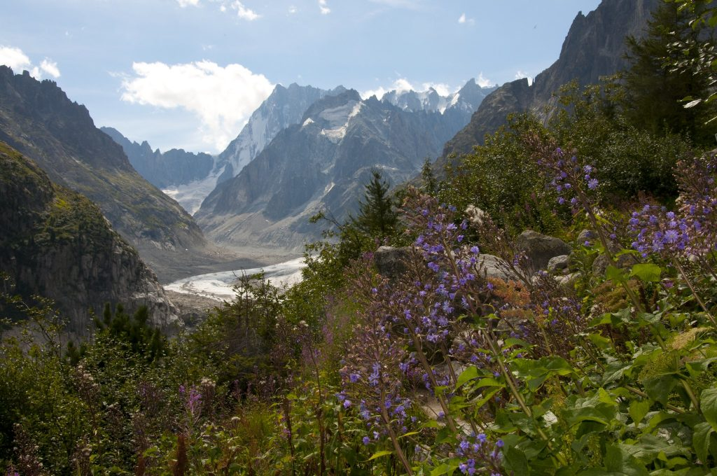Plants produce more nectar at high altitudes, where sunlight is more intense (What is Nectar: Basics for a Bee-Lover).