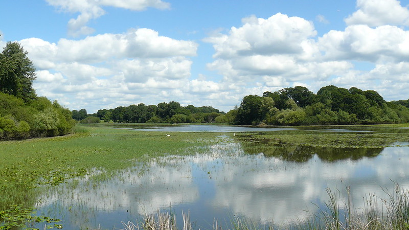 A lake at Knepp estate is a haven for wild life (described in Isabella Tree, 'Wilding').