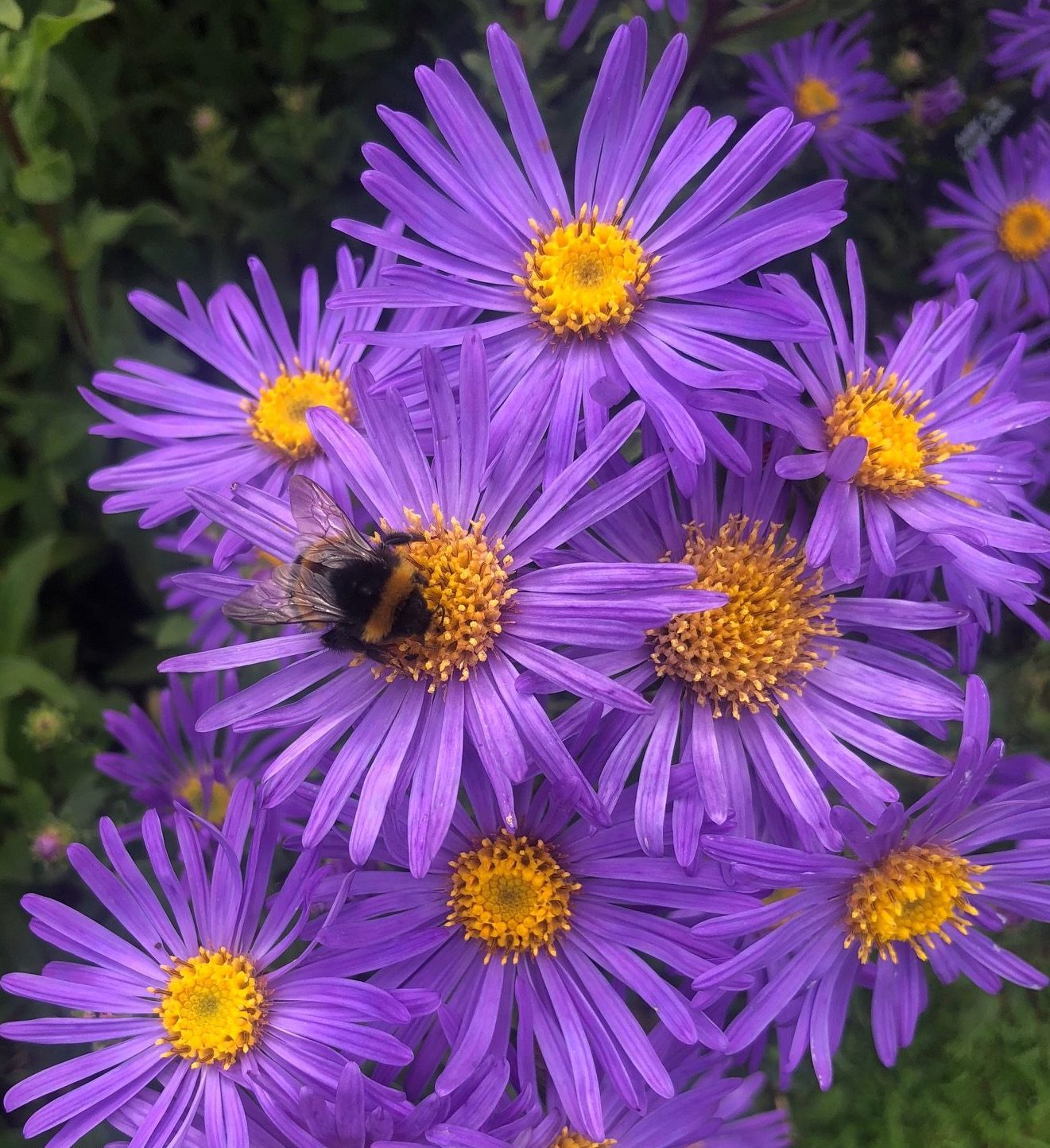 What is Pollen: Basics for a Bee-Lover