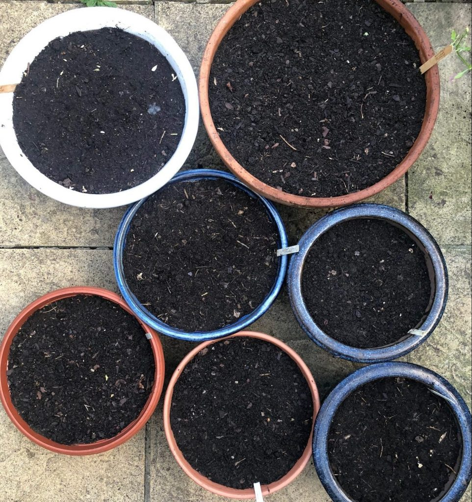 Growing winter salads in containers - ideas for a decorative patio garden