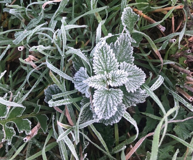 10 Edible Wild Greens for Autumn and Winter