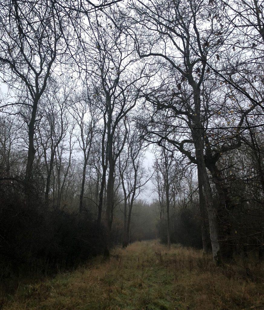 Dark winter evenings as inspiration for the Wild Hunt mythology.