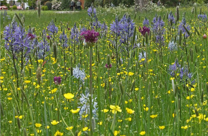 Wild flowers growing in Morton Hall garden.