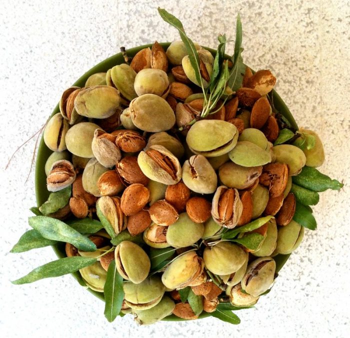 A bowl of fresh almonds - Natural Anti-Aging Cosmetics.