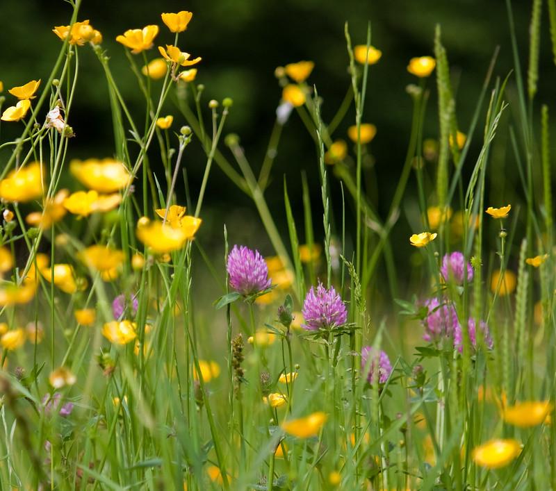 Wild flowers growing in a meadow.