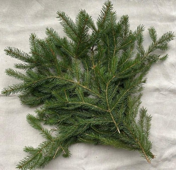 Spruce branches.