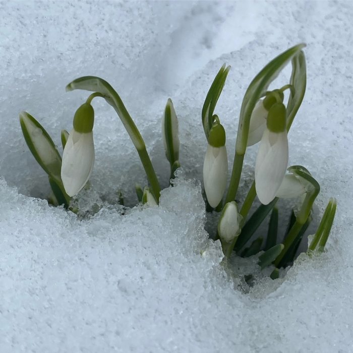 How to protect plants from frost damage in spring