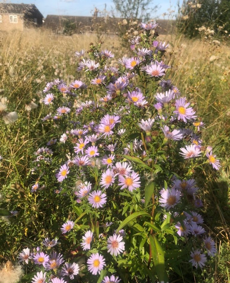 Small Scale Rewilding: How to Rewild your Garden