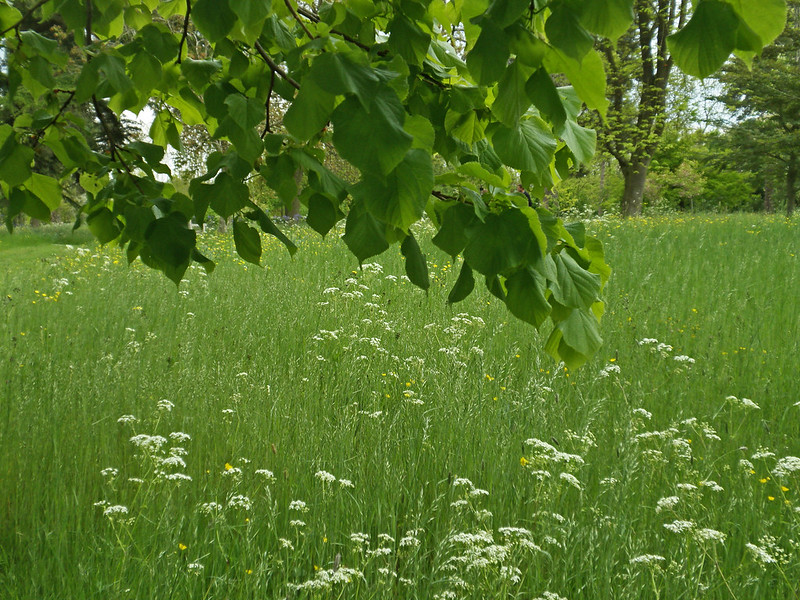 A natural lawn can be part of a small scale rewilding project.
