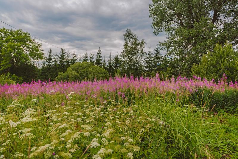 Best Wild Flowers to Grow in the Garden