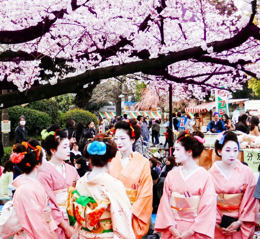 Cherry blossom celebration.