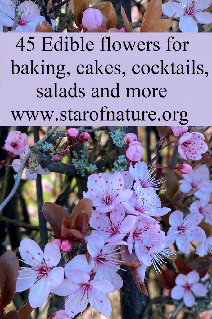 Edible flowers - pinnable image.