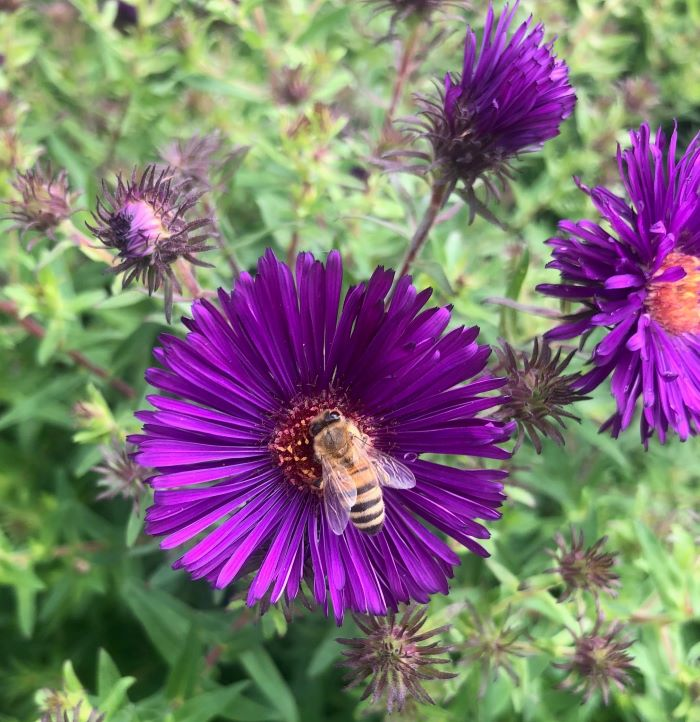 Les Crowder and Heather Harrell, 'Top-Bar Beekeeping: Organic Practices for Honeybee Health': a Review