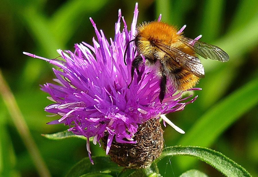 Best Wild Flowers for Bees and Butterflies